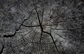 picture of decomposition  - thr Stump with traces To drying beauty - JPG