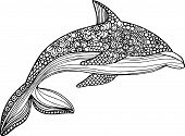 foto of dolphins  - vector hand drawn dolphin illustration with doodle ornaments - JPG