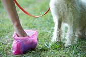 picture of pooper  - Owner Clearing Dog Mess With Pooper Scooper - JPG