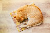 pic of laminate  - Peaceful Orange Red Tabby Cat Male Kitten Curled Up Sleeping In His Bed On Laminate Floor - JPG