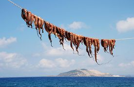 picture of greek-island  - Octopuses hanging on a line at Mandraki on the Greek island of Nisyros - JPG