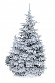 picture of snow forest  - Spruce covered with snow isolated on white background winter forest - JPG