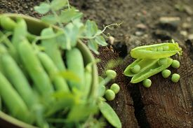 stock photo of pea  - brown ceramic bowl with open green peas on old wood - JPG