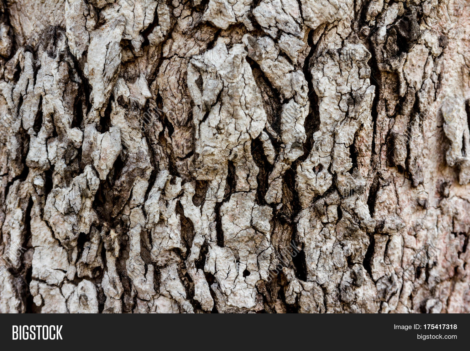 Rough Texture Background: Old Rough Wood Texture. Wooden Texture. Wooden Background
