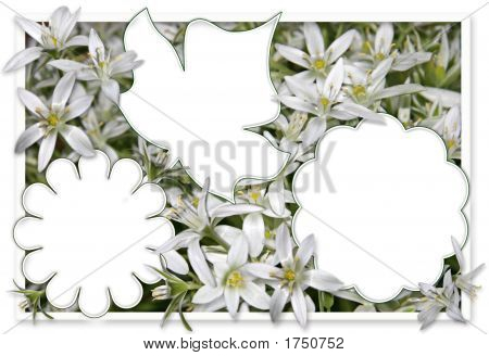 White Flower Frame