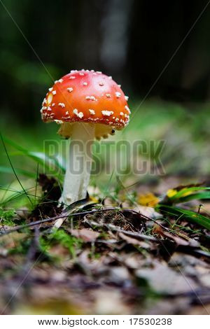 A magic mushroom in the forest - fly Amanita