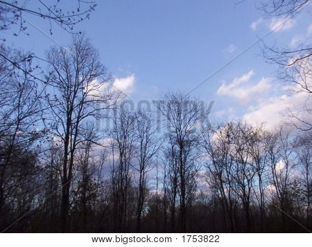 Inky Winter Trees Against a Cloudy Blue Sky