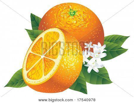 Imagem vetorial de duas laranjas