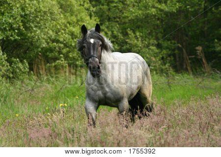 Horse In Gallop
