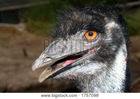 Emu Bad Hair Day