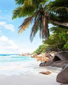 Beautiful tropical  sand beach with granite rocks and coconut palm trees. Beach Anse Cocos, La Digue poster