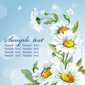 picture of floral bouquet  - White daisywheels on blue background - JPG