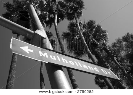 Mulholland Drive & Palm Trees Bw