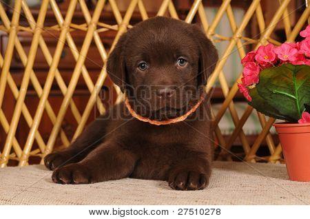 Cute Little Puppy Portrait