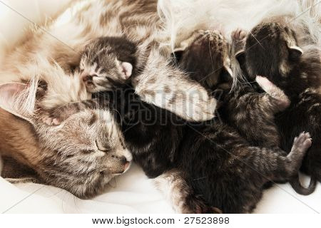 Mother cat and her newborn kittens