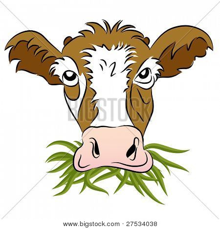 An image of a grass fed cow.