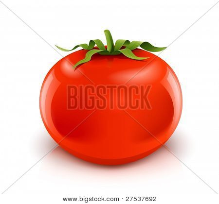 red ripe tomato vector illustration isolated on white background gradient mesh used