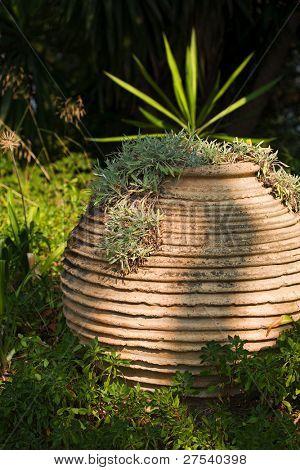 old terracotta pot at Mon Repos Park, Corfu, Greece