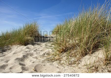 dune with grass at paris plage, Normandy, France