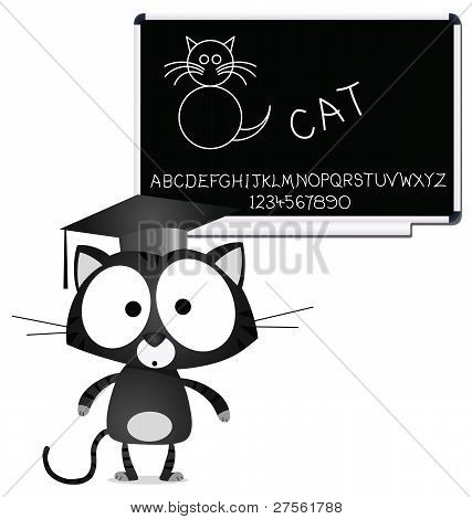 Cat teacher