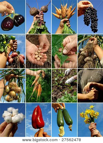 farmer hands with fruits seeds and tools