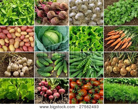 Постер, плакат: органические овощи и зелень, холст на подрамнике