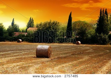 French Straw Field