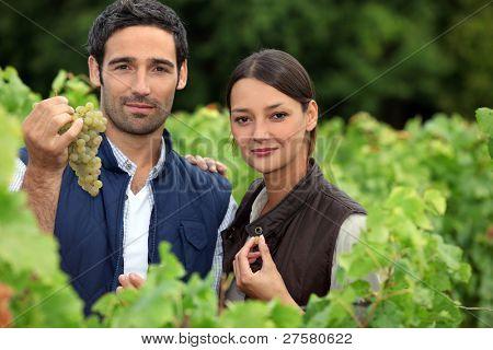 couple of wine-growers in vineyards
