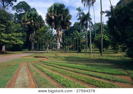Peradeniya Botanical Garden, Kandy