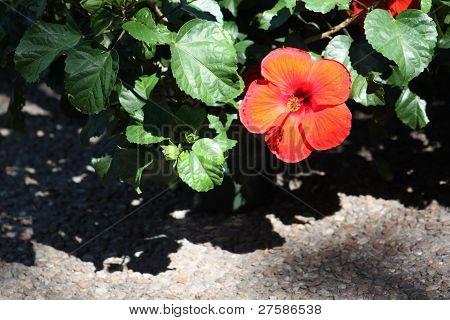 Flores de la Florida