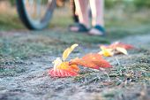 Fallen Autumn Leaves On The Path In The Background Cyclist And His Feet, Withered Grass Along The Pa poster