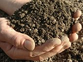 foto of humus  - hands with soil - JPG