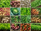stock photo of vegetation  - organic vegetables and greens - JPG