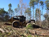 stock photo of skidder  - A logging skidder works in a pine forest - JPG
