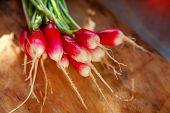Summer Harvested Red Radish. Growing Organic Vegetables. Large Bunch Of Raw Fresh Juicy Garden Radis poster