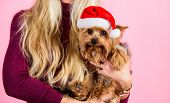 Reason Love Christmas With Pets. Ways To Have Merry Christmas With Pets. Girl Attractive Blonde Hold poster