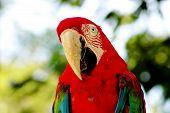 Parrot Portrait poster