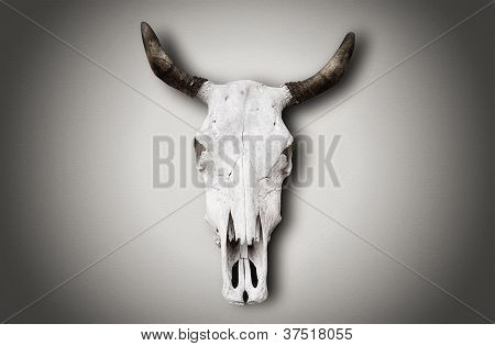 Image Of An Old Cow Skull Hanging On White Wall.
