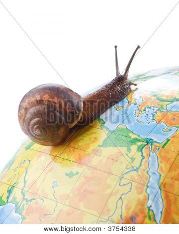 Garden Snail On Globe