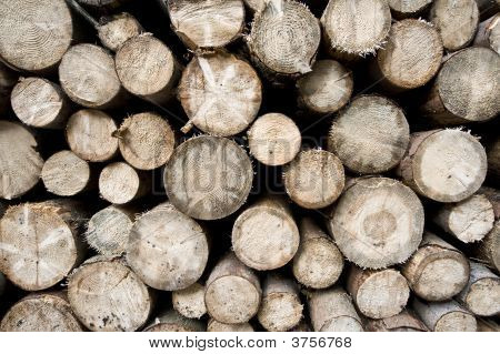 Woodpiles - Plain View