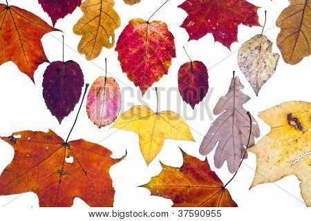 Many Dried Autumn Leaves