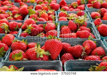 Narrow Focus Horizontal Strawberries