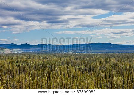 Central Yukon T Canada taiga and Ogilvie Mountains
