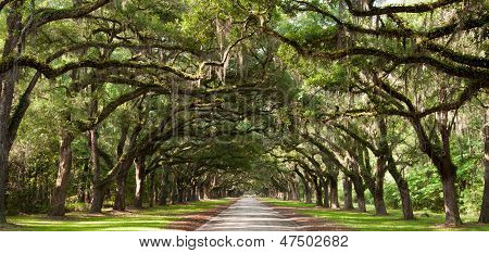 Oak Tunnel