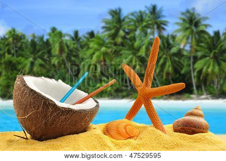 coconut with straws starfish and shells