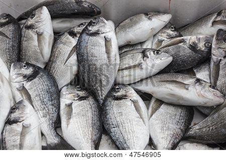 Fisch Goldbrasse Bream