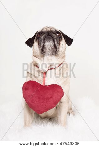 Pug Heart Valentine's Day