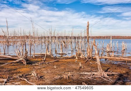 Lake And Dead Trees