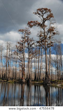 Winter time in the Okefenokee Swamp