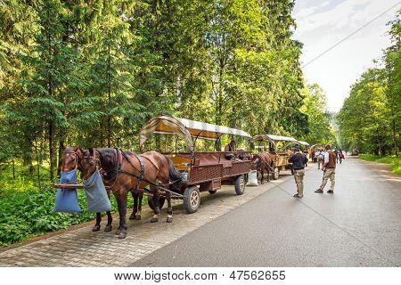 ZAKOPANE, POLAND - JUNE 25: Unidentified people at horse carts in Tatra National Park on 25 June 2013. Horse cart ride is a tourists attraction on the way to the